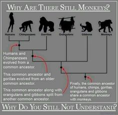Why are there still monkeys? #evolution