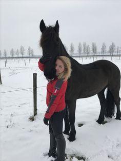 Frisianhorse blackbeauty horse snow