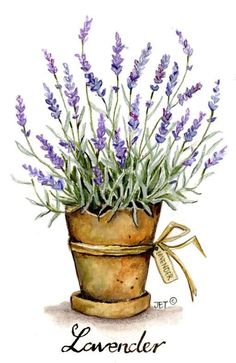 home decor watercolor lavender in can - Yahoo Image Search Results Watercolor Cards, Watercolor Flowers, Watercolor Paintings, Watercolours, Face Paintings, Lavender Flowers, Lavander, Lavender Plants, Art Impressions
