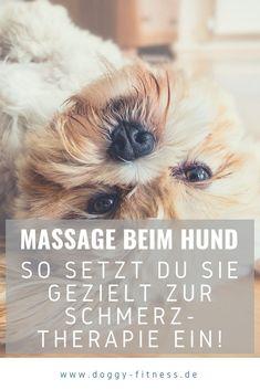 Massage beim Hund ist keine Erfindung der Neuzeit und ein wichtiger Bestandteil der Hundephysiotherapie. Auch Hundehalter können nach entsprechender Anleitung ihrem Hund mit leichten Massagegriffen etwas Gutes tun. Zum Einsatz kommen Massagen beim Hund z.B. bei Gelenkerkrankungen, Sporthunden, älteren Hunden, zur Wellness und neurologischen Erkrankungen. Massage Hund | Hundephysiotherapie | Gelenkprobleme | Schmerzen | Verspannungen | Entspannung