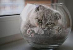 Cat in Glass