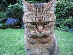 33 Animales que est�n sumamente decepcionados de ti