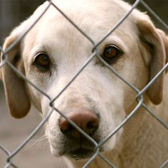 Save innocent dogs from cruelty now!