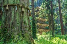 羽黒山五重塔/ライトアップ必見♬歴史の森に悠然と佇む五重塔、出羽三山を往く※見どころ、アクセス