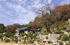 青瓦(せいが)の母の家の柿の木&御子の椅子地域 - WolMyeongDong(キリスト教福音宣教会)