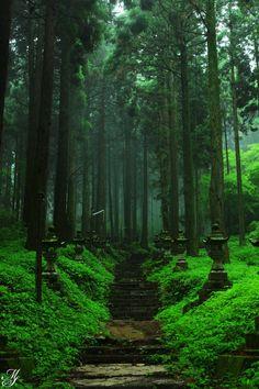 本日参拝して参りました。霧雨でより幻想的な雰囲気。何とまぁ美しい・・・予定変更しての参拝だった為、ポジフィルムを持ってきていなかったのが悔やまれます。雨中...