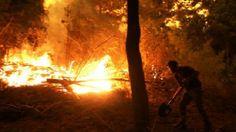 Incendios forestales en Chile desatados: hay 4 muertos