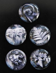 Glass magnets new zealand fern prints in black and by NewCreatioNZ, $18.00