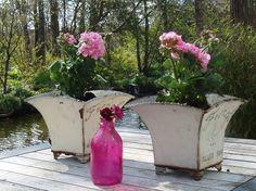 Voel me gelijk stukken beter met wat bloeiends rose in de tuin...