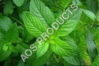 is a leading name in essential oils manufacturing and provides Dementholised Mint oil, CAS No FEMA No 2848 at the best market prices. Half A Decade, Mint Oil, Superior Quality, Plant Leaves, Essential Oils, Plants, Products, Plant, Beauty Products