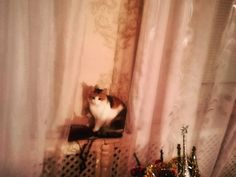 non mi chiama nessuno ??? Foto di gatto in attesa!!!