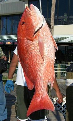 Red snapper. Orange Beach.         Never went deep sea fishing, but boy are these good!?