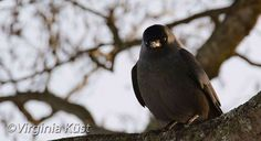Träffade en liten linslus i jakt på vinterbilder :) #photography #fotografi #birds Photography, Animals, Photograph, Animales, Animaux, Fotografie, Photo Shoot, Animal Memes, Fotografia