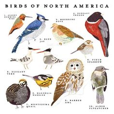 Birds of North America Print by smalladventure on Etsy - got this as a bday present :-)