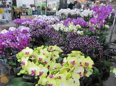 Orchid Plant Trading Co.