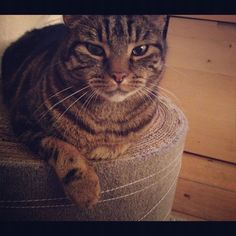 Cat scratching pad - save your sofa! Make this!!!