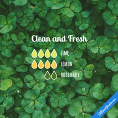 Clean and Fresh - Essential Oil Diffuser Blend