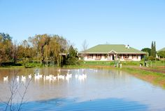 Hoopenburg Guest House - Hoopenburg Guest House is situated on a 70 hectare boutique wine estate, with the lush garden attracting a wide range of birdlife. Sweeping views over the vineyards and lovely sunsets makes this a natural ... #weekendgetaways #stellenbosch #southafrica