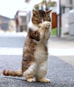得意のお祈りポーズを披露してくれた福ちゃん(雌12歳)。かなり気持ちがこもっている…ような気がしませんか?=佐賀県唐津市の高島(尾崎修二撮影)