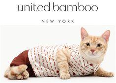 United Bamboo cat calendar, just too cute to be true