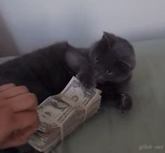 When this cat refused to pay for your lifestyle: