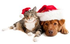 Show us your best holiday pet family photo.