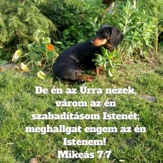 Prayers, Blessed, Urban, Blessings, Dogs, Animals, Facebook, Animales, Animaux