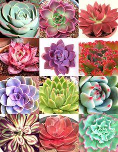 in Casa e jardim, Pátio, jardim e ambientes externos, Plantas, sementes e bulbos
