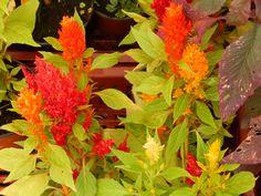 #Flores muy #Coloridas y #Vibrantes !