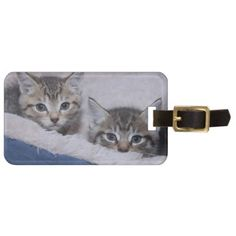 BROWN TABBY KITTENS LUGGAGE TAG - accessories accessory gift idea stylish unique custom