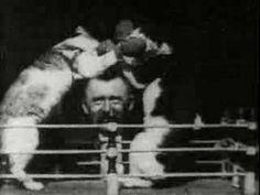 boxing cats, 1894. film by thomas edison.  Funny funny man that Edison.  :)