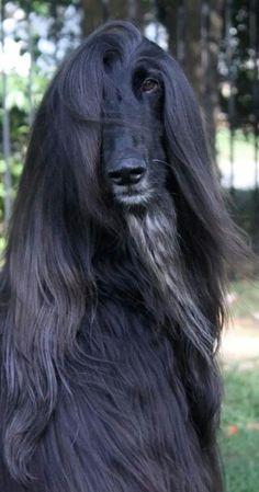 Sims 3 Afghan Hound afghan hound | ...