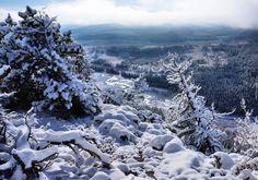 Zima, Ośnieżone, Drzewa, Lasy, Rzeka