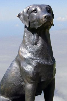 This Bronze Statue Of A Labrador Seems To Be Very Much Alive. Labradors Are  Members