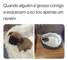 Que cachorrinho lindo Best Memes, Funny Memes, Comedy Memes, Otaku Meme, Memes Status, Wholesome Memes, Some Quotes, Haha, Cute Animals