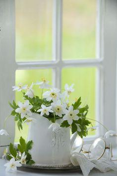 ❧ Le printemps ❧