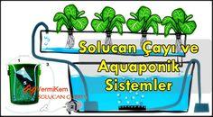 Solucan Çayı ve Aquaponik Sistemler    Bu yazımızın konusu, hem balık ve hem de bitki yetiştirme sistemi olan aquaponik sistemin daha doğal ve sağlıklı olması için ona solucan çayını entegre edip edemeyeceğimizdir.    http://solucangubresi.web.tr    #solucangubresi #solucangubresi #vermikompost #gübre #kirmizikaliforniya #organikgubre #organik #solucan #solucangubresi #tarim #kompost #iyitarim #dogalgubre #vermikem