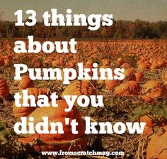 13 Things about Pumpkins that You didn't know