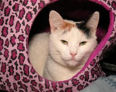 Utah is an adoptable Domestic Short Hair-white searching for a forever family near Milford, MA. Use Petfinder to find adoptable pets in your area.