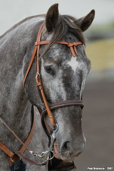 Beautiful Roan
