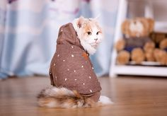 Warm and Cute Hooded Suit for Cats. Cute Cats, Funny Cats, Dog Pads, Buy A Cat, German Shepherd Puppies, Service Dogs, Pet Beds, Pet Clothes, Little Dogs