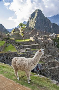 Machu Picchu by Joe Routon on 500px