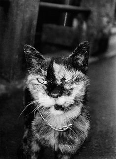 Shinjuku (Stray cat), 2002 by Daido Moriyama ~~a hard cruel life ♡ Walker Evans, Tim Walker, Karl Blossfeldt, Herbert List, Lee Friedlander, Mary Ellen Mark, William Wegman, August Sander, Diane Arbus
