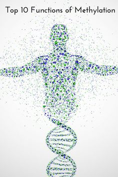 The Top 10 Functions of Methylation