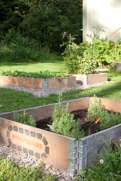 Vihreä talo: Tomaatti, mansikka ja laventeli