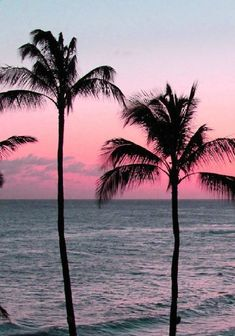 pastel sunset with palm trees. Pastel bring out the harsh yet softness of the palm trees. The different colours contrast with each other. Fringed leaves and and textured trunks. Beautiful World, Beautiful Places, Beautiful Ocean, Beautiful Sunrise, The Beach, Summer Beach, Pink Beach, Beach Fun, Miami Beach