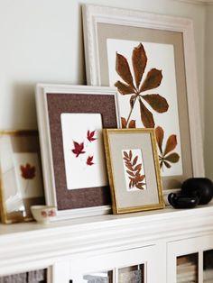DIY Leaf Display - pressed leaves in various frames