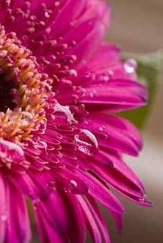 Creative Photography Project Ideas: How to set up your own Macro Studio and shoot Beautiful Close Up images of Flowers