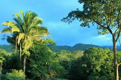 A view out over the #rain-forest at sunset near Pook's Hill Lodge in #Belize