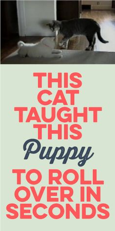 This Cat Taught This Puppy To Roll Over IN SECONDS! Wow!